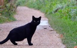 2019-02-11 superstition black cat